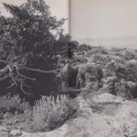 Вход в пещеру Илифии в Амнисе. Крит. Фото: Анджей Дзевановский