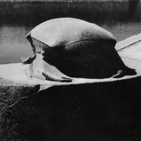 Карнак. Египет. Гранитный скарабей Аменхотепа III у священного озера. Фотограф: Анджей Дзевановский