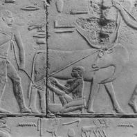 Сцена доения. Рельеф из мастабы Кагемни в Саккаре. VI династия. Фото: Анджей Дзевановский
