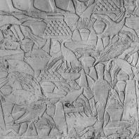 Сцена жертвоприношения. Рельеф из мастабы Ти в Саккаре. V династия. Фото: Анджей Дзевановский