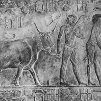 Сцена с быком. Рельеф мастабы Птаххотепа в Саккаре. V династия. Фото: Анджей Дзевановский